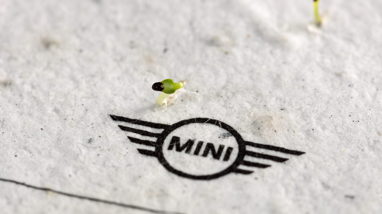 MINI Growing Paper